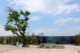皂角树广场